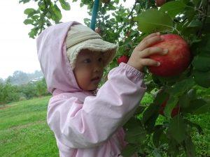 りんごがり