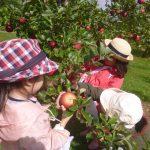 りんご狩り3